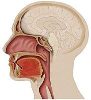 Respiración Oral